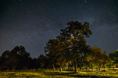 Green Trees Oak Woods In Park Under Night Starry Sky With Milky Way Galaxy Stock Images