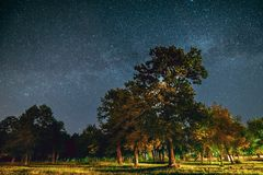 Green Trees Oak Woods In Park Under Night Starry Sky With Milky Way Galaxy. Night Landscape With Natural Real Glowing