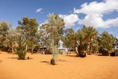 Oasis in the Sahara desert, Morocco. Green trees in oasis in the Sahara desert, Morocco Royalty Free Stock Photography