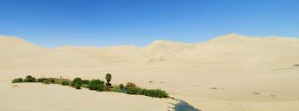 Green trees oasis in white sand desert Stock Photos