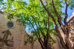 Green trees and old city buildings stock photography