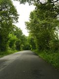 Green trees stock image