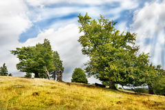 Green trees over blue sky. Photo of green trees over blue sky Royalty Free Stock Photography