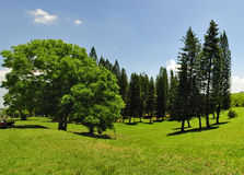 Green trees panorama Stock Photos