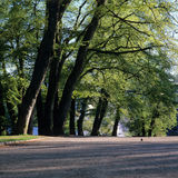 Green trees in a park Stock Photo