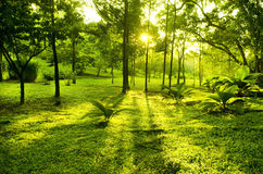 Green trees in park Stock Photos