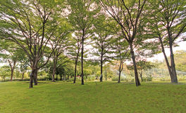 Green trees. In the park Stock Photography