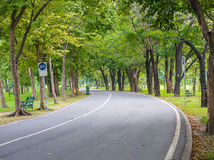 Green trees in the park Royalty Free Stock Image