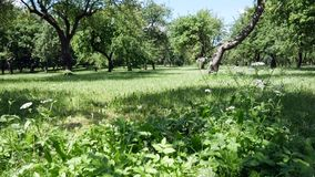 Green trees in the park. Grass and plants on the lawn stock video footage
