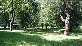 Green trees in the park. Light of the sun on the lawn stock video footage