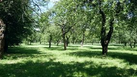 Green trees in the park. Light of the sun on the lawn stock footage