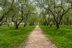 Green trees in park, a morning view Royalty Free Stock Images
