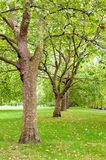 Green trees in park Royalty Free Stock Photo