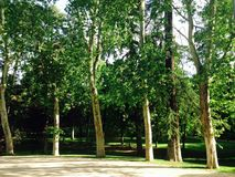 Green trees in a park Royalty Free Stock Photo