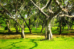 Green trees in park Royalty Free Stock Photography