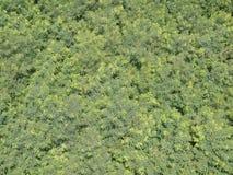 Green trees plan view. Green trees plan total view Royalty Free Stock Photos