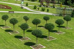 Trees planted in triangle. Green trees planted in line in the shape of triangle Royalty Free Stock Photo