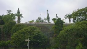 Green trees and plants in park of Funshal. On Madeira island stock video footage