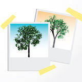 Green trees on polaroid cards. Royalty Free Stock Image