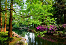 Green trees and pond Royalty Free Stock Image