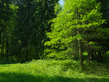 Green trees in the prak with fresh green grass and young oak tre. Green trees in the prak with fresh green grass summer landscape Stock Photos