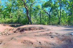 Green trees on red soil Royalty Free Stock Photos