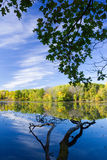 Green trees reflecting on a blue lake in Minnesota. Branches and green tree foliage reflect on the surface of a blue lake in a park in Minnesota Stock Image