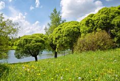 Green trees on a river coast Stock Photography