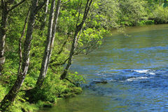 Green trees and river in Ketchikan, Alaska Royalty Free Stock Photography