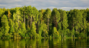 Green trees on the riverbank with reflection and waves Royalty Free Stock Photos