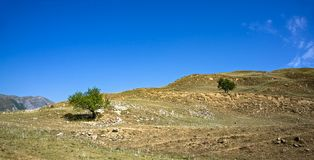 Green trees on scorched hill stock photo