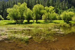 Green trees on the shore of Mirror Lake Royalty Free Stock Photos