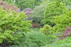 Green trees, shrubs in bloom, in spring english mature garden Royalty Free Stock Photos