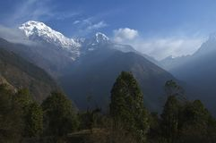 Green trees and snowy mountains. Trekking to Annapurna Base Camp. Nepal royalty free stock photo
