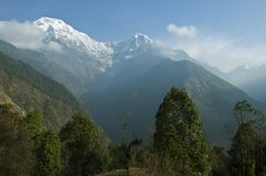Green trees and snowy mountains. Trekking to Annapurna Base Camp. Nepal royalty free stock images