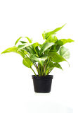 Green trees suitable for planting Stock Image