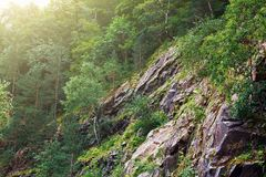 Green trees in sunlight on stone slope of the mountain or rock, summer nature landscape Royalty Free Stock Photography
