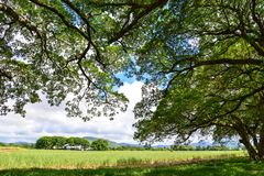 Green trees at the sunny day in tropical forest. Green trees with the grass field at the sunny day in tropical forest Stock Photos