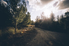 Green Trees during Sunset Stock Photography