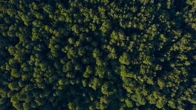 Green trees on sunset, overhead view stock photography