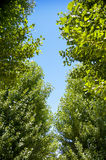 Green trees with the sunshine. 1 Royalty Free Stock Photos