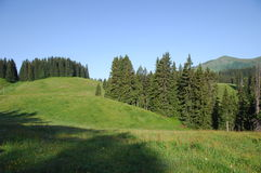 Green trees at Swiss Location Royalty Free Stock Images