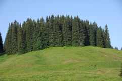 Green trees at Swiss Location Stock Images