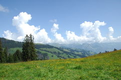 Green trees at Swiss Location Royalty Free Stock Photography