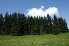 Green trees at Swiss Location Stock Photography