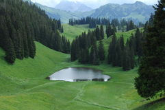 Green trees at Swiss Location Royalty Free Stock Photos