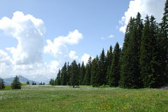 Green trees at Swiss Location Stock Image