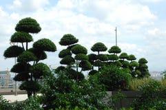 Green trees at Swiss Location Stock Photos