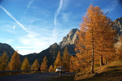 Green trees at Swiss Location Royalty Free Stock Image
