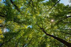 Green trees top Stock Image